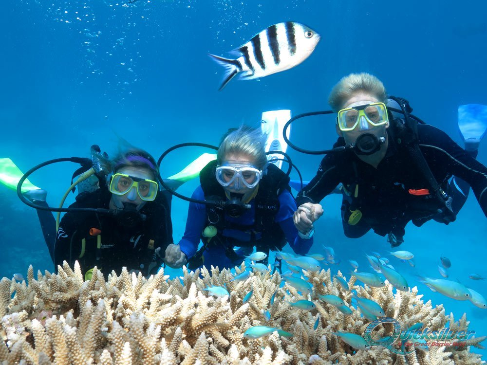 Diving on the Great Barrier Reef - Scuba Dive Cairns and ...