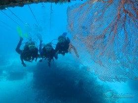 scuba great barrier reef exploring