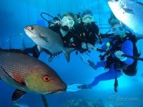 marine life scuba great barrier reef