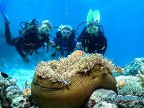 Great Barrier Reef clownfish scuba diving