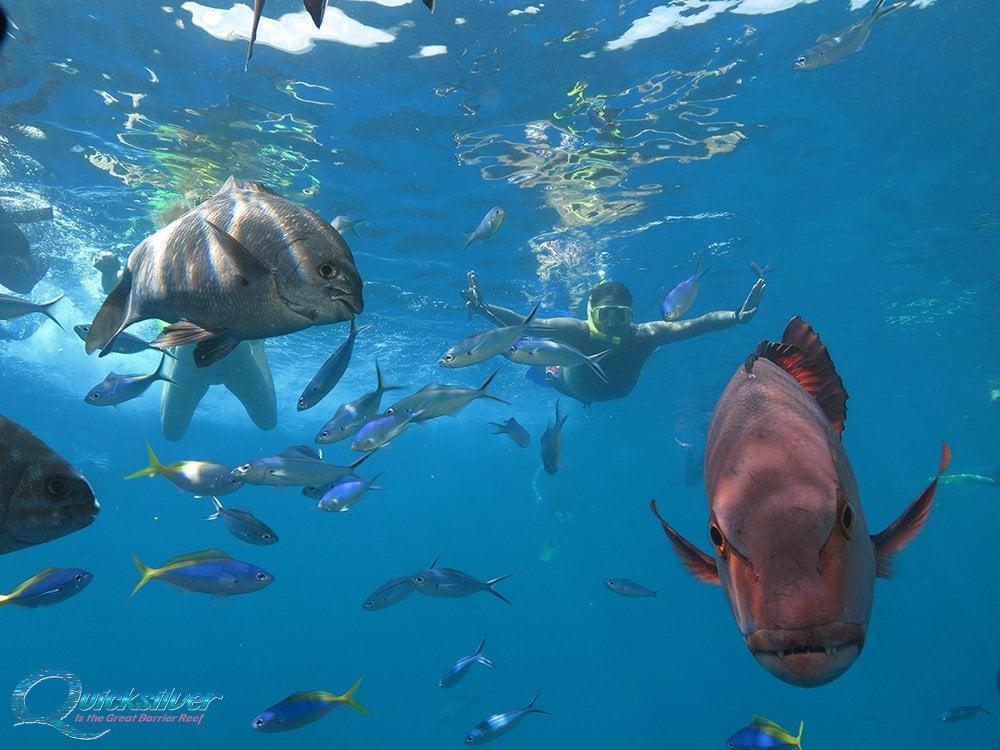 Great Barrier Reef Amp Agincourt Reef Gallery Quicksilver