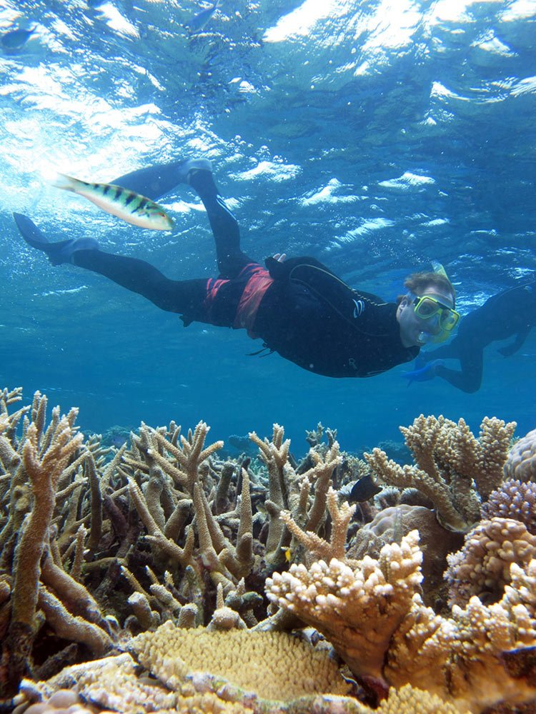 Snorkelling on the Great Barrier Reef - Port Douglas ...