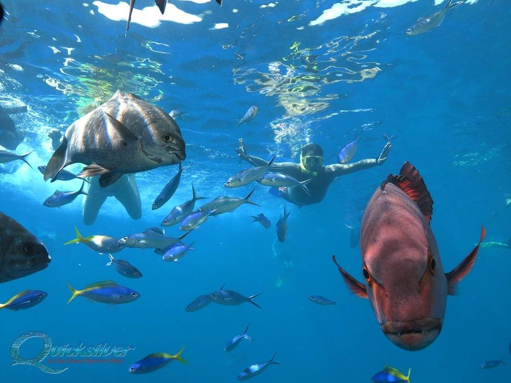 Snorkelling on the Great Barrier Reef - Port Douglas ...