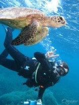 Turtle Scuba Dive Great Barrier Reef