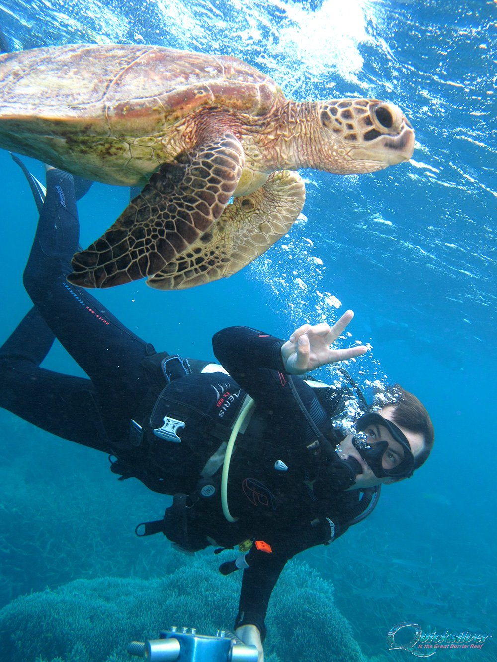 Diving On The Great Barrier Reef - Scuba Dive Cairns And Port Douglas