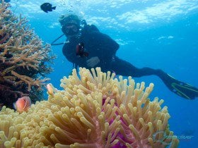 Certified Great Barrier Reef Diving